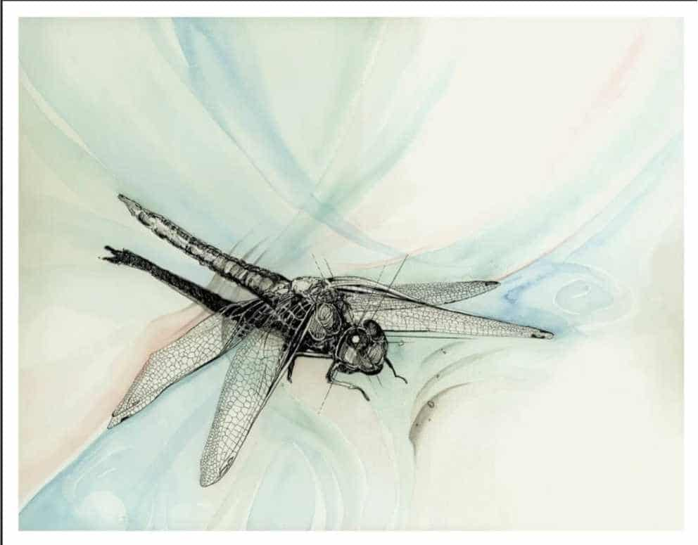 dragonfly watercolour painting by Colleen Joy